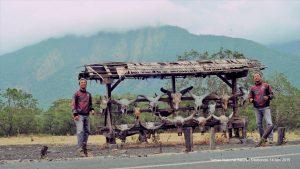 Di Taman Nasional Baluran Situbondo Jawa Timur, Jumat (14/6/2019). Foto: dok. pribadi