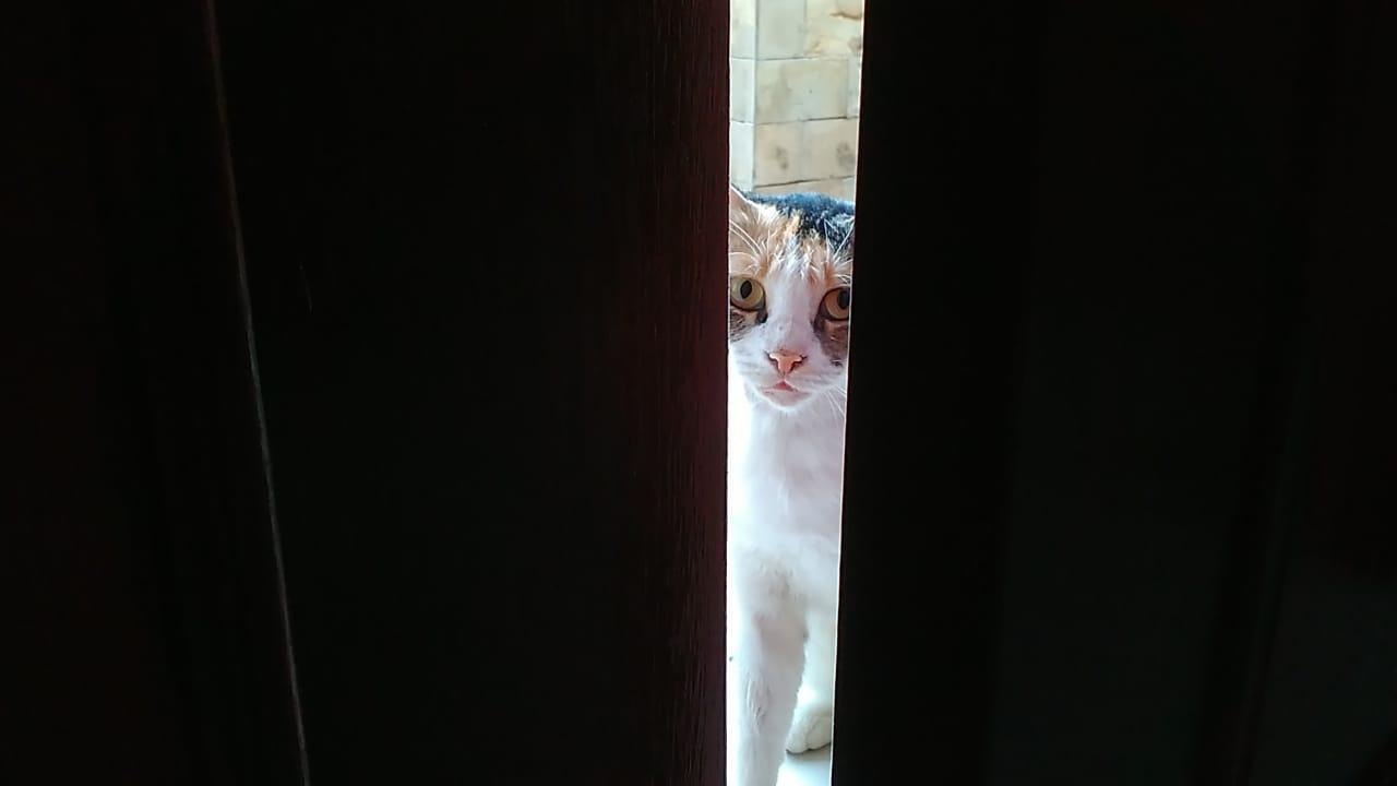Kucing betina ini setiap pagi menunggu di depan pintu rumah. Lihat ulahnya ini. Foto: dok. pribadi