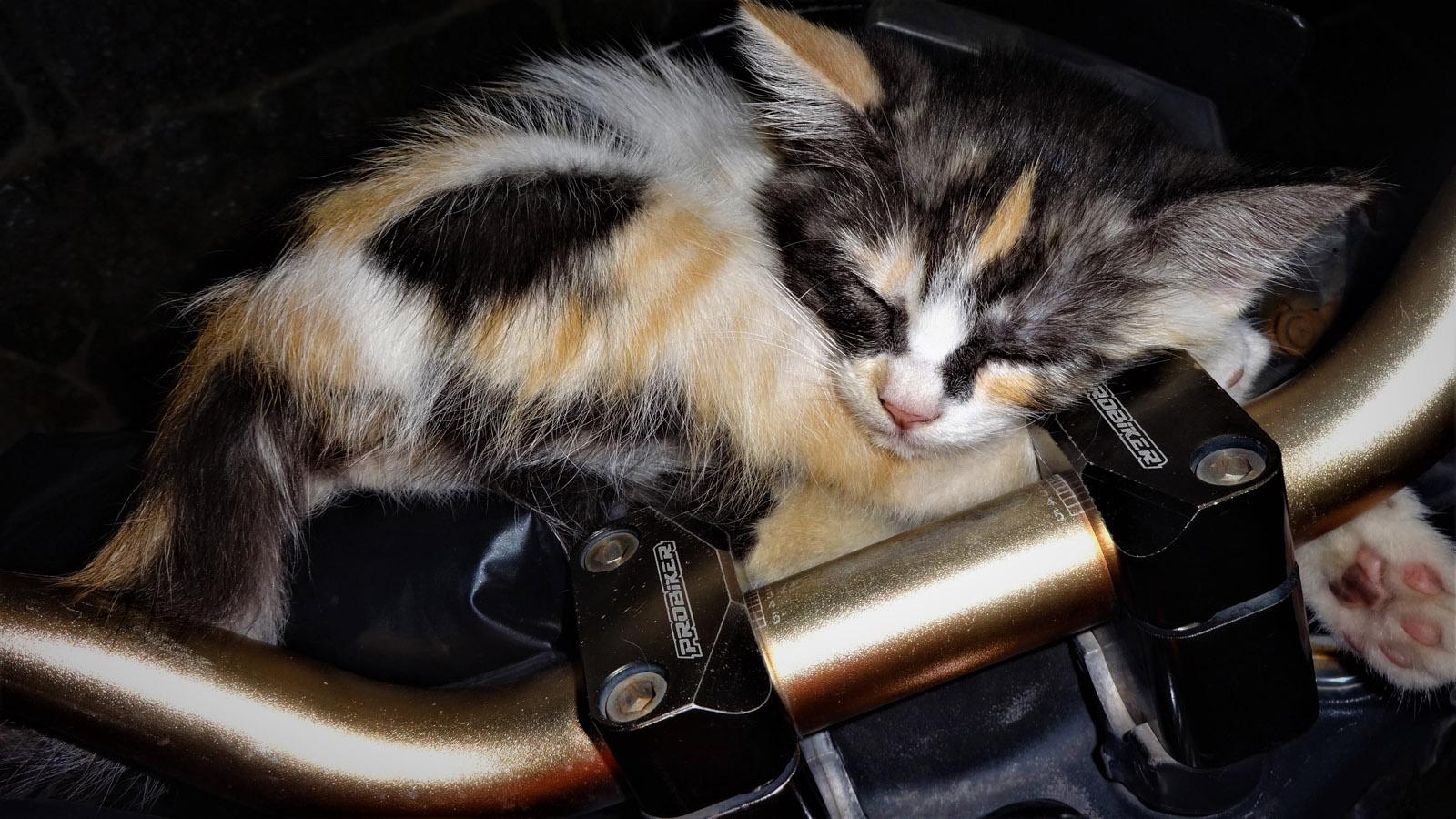 Menggemaskan, Kucing ini Tidur di Dashboard Motor